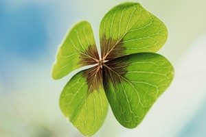 Four Leaf Clover --- Image by © Royalty-Free/Corbis